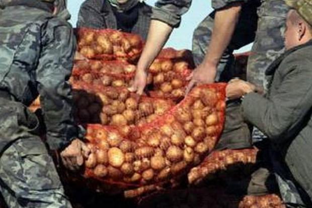 Ukraina kupuje ziemniaki w Arabii Saudyjskiej i Egipcie, a rezygnuje z zakupów w Polsce