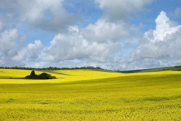 Biopaliwa wpłyną na 5 proc. wzrost cen żywności w 2020 r.