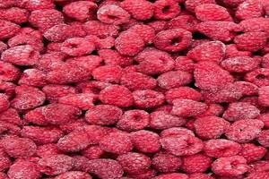 Spadek wartości eksportu mrożonych owoców