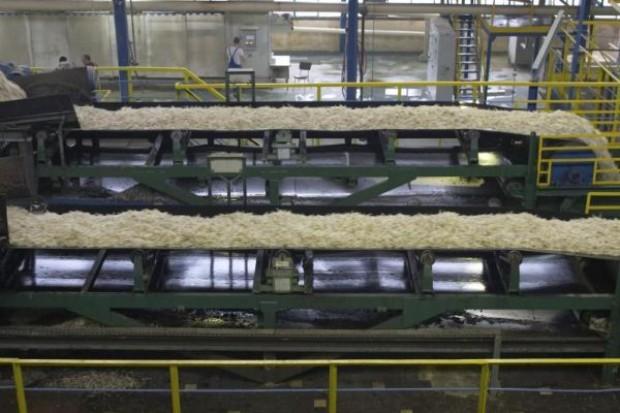 Przedwojenne fabryki cukru nie wejdą na NewConnect