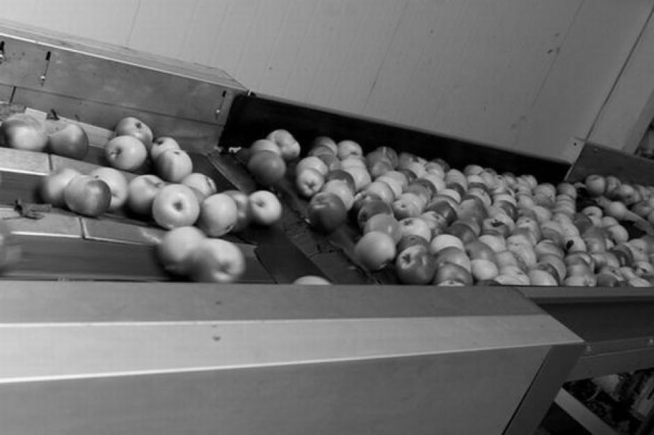 Stabilne ceny jabłek na rynkach hurtowych