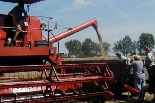 Niewielki ruch w skupie zbóż