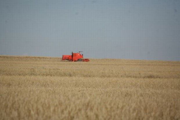 MRiRW: Ceny zbóż maleją
