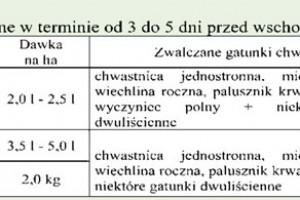 Zdjęcie numer 2 - galeria: Zwalczanie chwastów jednoliściennych w ziemniakach i niektórych roślinach strączkowych