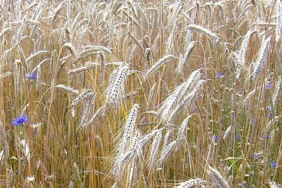 Członkostwo Polski w UE zwiększyło dochody rolników