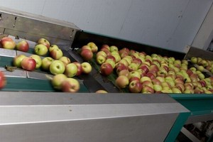 Chiny: Spadek eksportu koncentratu soku jabłkowego
