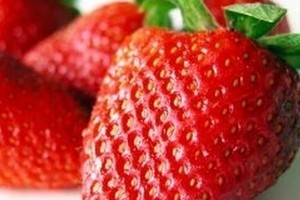 Deszcz zaszkodzi plantatorom truskawek i malin