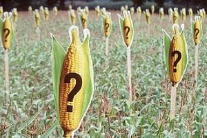 """Kraje Unii chcą oznakowania produktów """"wolnych od GMO"""""""