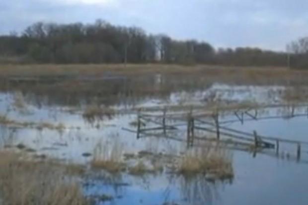 Z powodu powodzi na początku 2011 r. w Polsce może zabraknąć zbóż konsumpcyjnych