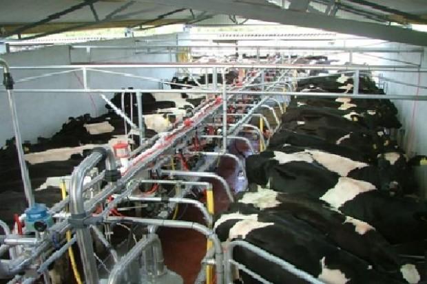 Na rynku brakuje surowca. Polskie mleczarnie skupują mleko z Niemiec