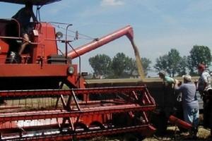 """W Rosji zbiory zbóż wyniosą """"zaledwie"""" 90 mln ton"""