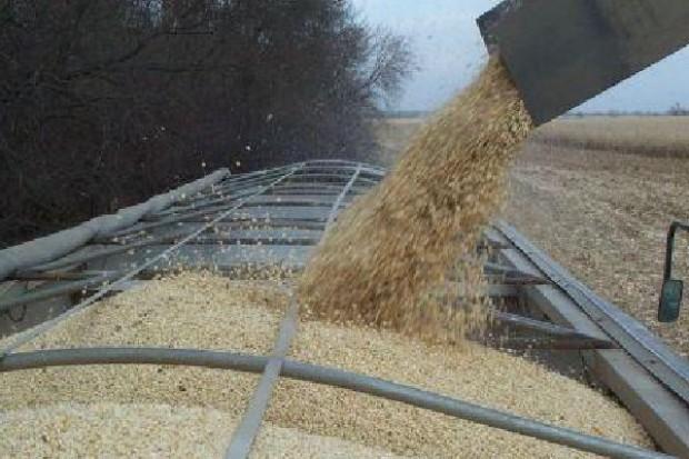 Greenpeace: Uprawy GMO nie dają większych plonów niż tradycyjne uprawy
