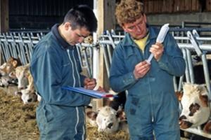 Powstaje gigant europejskiego mleczarstwa