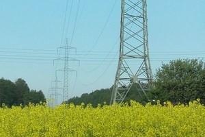O 0,2 mln ton zmaleje produkcja rzepaku w Polsce