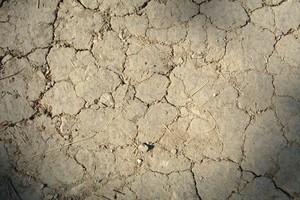 IUNiG: Jest zagrożenie wystąpienia suszy rolniczej w Polsce