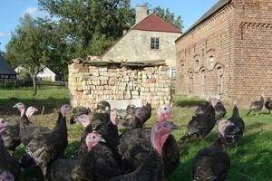 BGŻ: Poprawia się sytuacja w unijnym handlu zagranicznym mięsem drobiowym