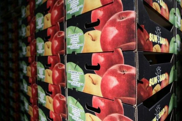 Zakłady przetwórcze skupują owoce za ceny dwu-, trzykrotnie wyższe niż przed rokiem