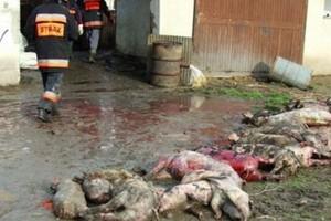 Śmiertelna zaraza zabija zwierzęta tuż przy naszej południowej granicy