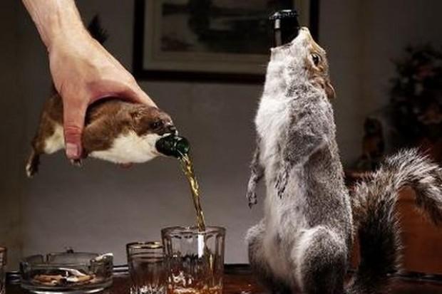 BrewDog szokuje: sprzedaje piwo w wypchanych zwierzętach