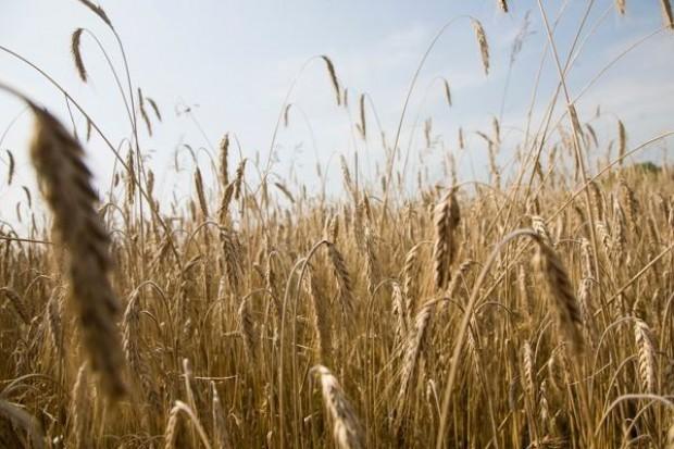 Ukraina odkłada decyzję w sprawie ograniczenia eksportu zbóż