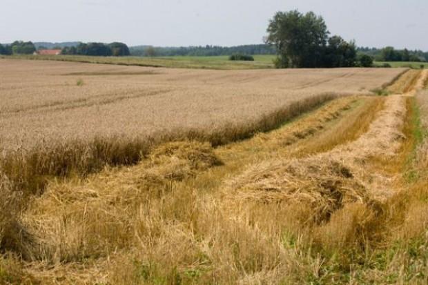 USDA: Światowe zbiory zbóż wyniosą 2,21 mld ton
