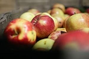 Ekspert IERGŻ: Polskie zakłady powinny ostrożnie kalkulować cenę skupu jabłek