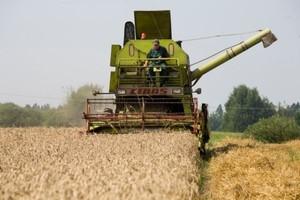 IERiGŻ: Zbiory zbóż w tym roku niższe o 1-1,5 mln ton