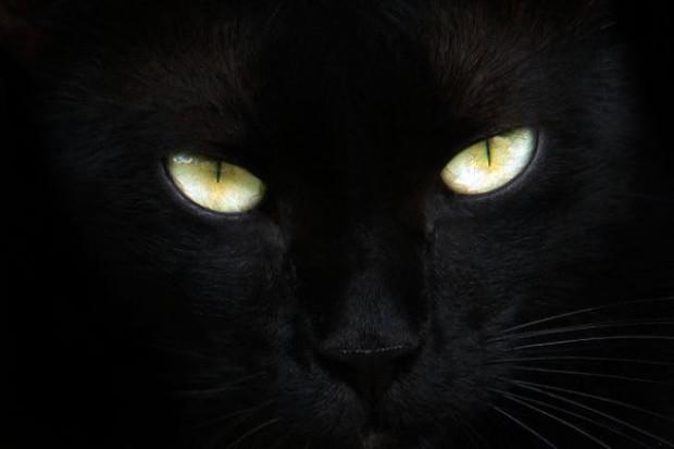 Powstał Ruch Obrony Czarnych Kotów