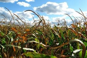 UE: Brak poparcia, w tym Polski, dla propozycji KE ws. GMO