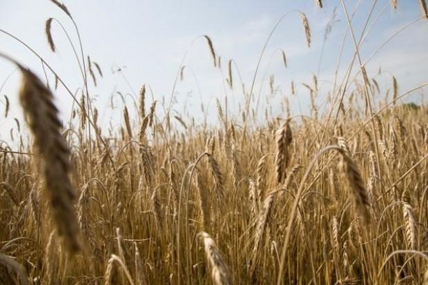 Ukraina szacuje tegoroczne zbiory zbóż na 39 mln ton