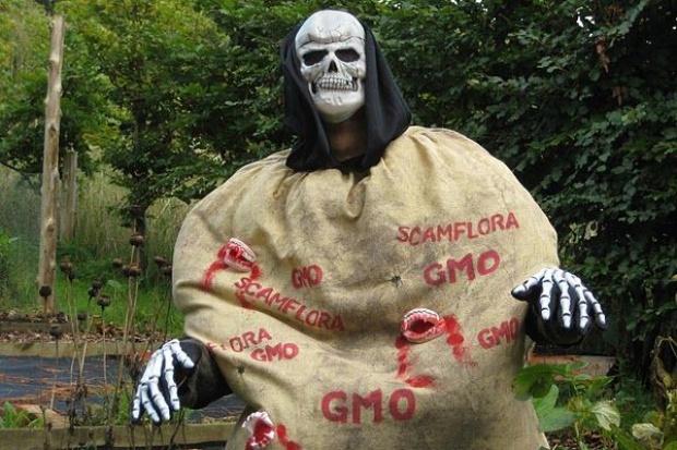 Modyfikowany genetycznie ziemniak niebezpieczny dla ludzi?