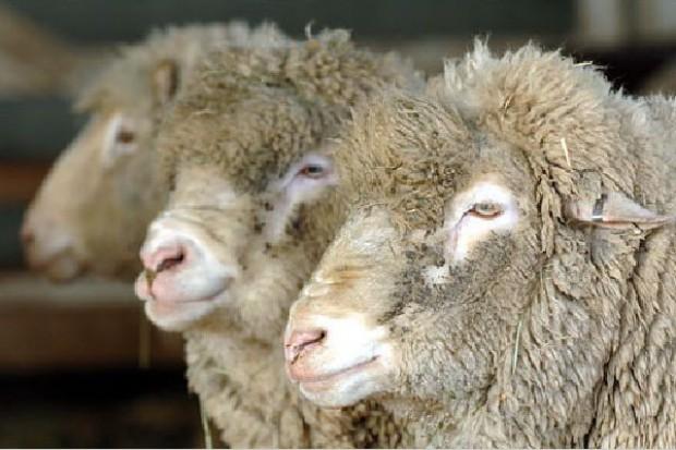 Będzie 5-letni zakaz na klonowaną żywność w UE?