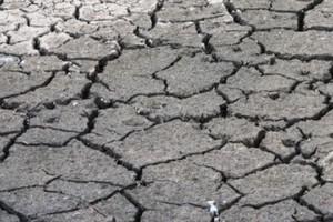 Światu grozi kryzys żywnościowy?