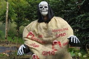 """Papieska Akademia Nauk mówi """"TAK"""" dla żywności genetycznie modyfikowanej"""