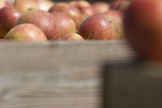Mniejsze zbiory jabłek w Chinach