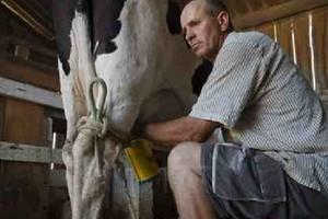 KE chce wzmocnić pozycję producentów mleka wobec przetwórców i sieci handlowych