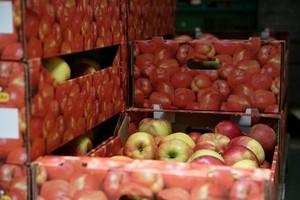 Raport IERiGŻ: Ok. 1,4 mld euro nadwyżki w handlu żywnością w I połowie 2011 r.?
