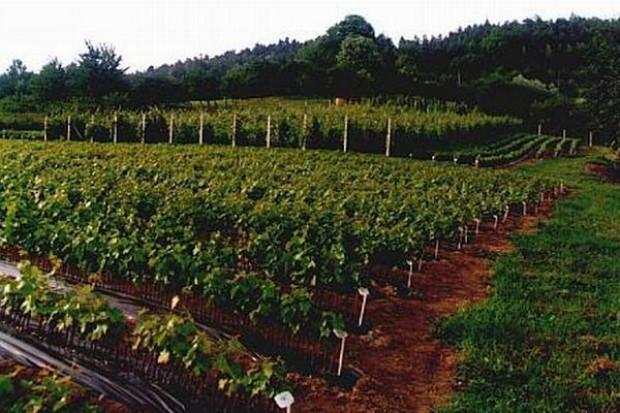 Rząd obiecuje: winiarzom będzie łatwiej