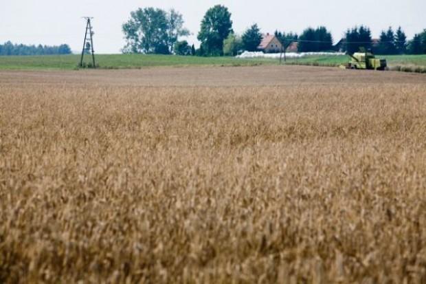 Za rok w UE będzie więcej żyta i pszenicy