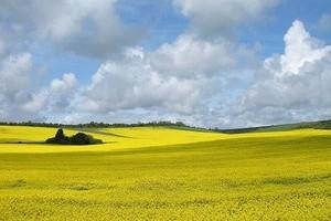 Unia wyprodukowała o 3,4 proc. mniej roślin oleistych niż w 2009 r.