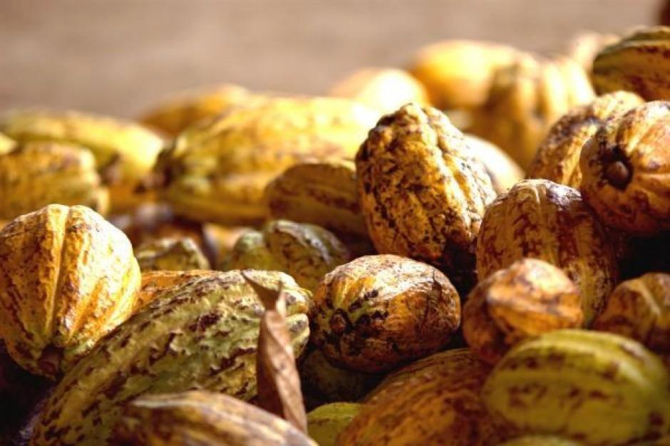 Światowy rynek kakao wzrośnie do 4,8 mln ton w 2015 r.