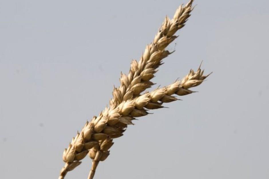 Argentyńscy farmerzy wstrzymują sprzedaż zbóż za granicę