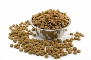 Rośnie warty 1,6 mld zł rynek karmy dla zwierząt