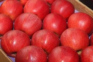 Analiza portalu: Stabilne ceny jabłek na rynkach hurtowych