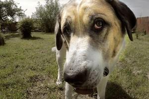 Wietnamczyk planuje otworzyć w Polsce lokal oferujący psie i kocie mięso