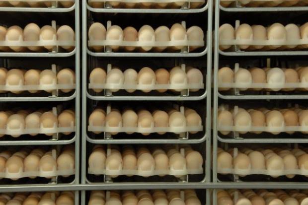 Zwracajmy uwagę na znakowanie jaj