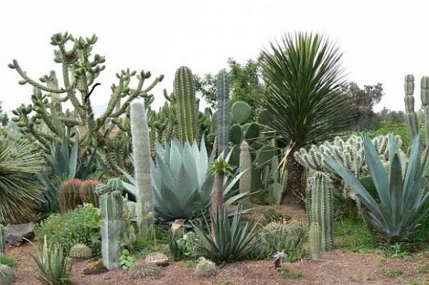 Kaktusy podbiły Ziemię podczas globalnego ochłodzenia 5-10 mln lat temu