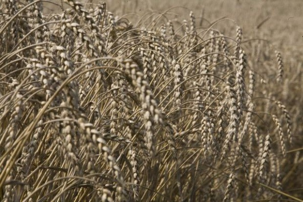 Ocieplanie się klimatu częściowo odpowiedzialne za wzrost cen żywności