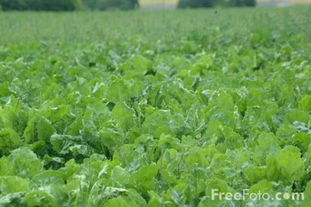 Rynek polskich producentów ekożywności rośnie 20-30 proc. w skali roku