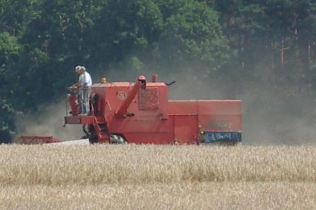 Są obawy o uprawy zbóż w UE, ale perspektywy dla zbiorów światowych są dobre